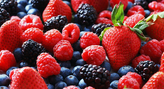 Mexico: Berries increasingly gain more land in export   Blueberries  Consulting